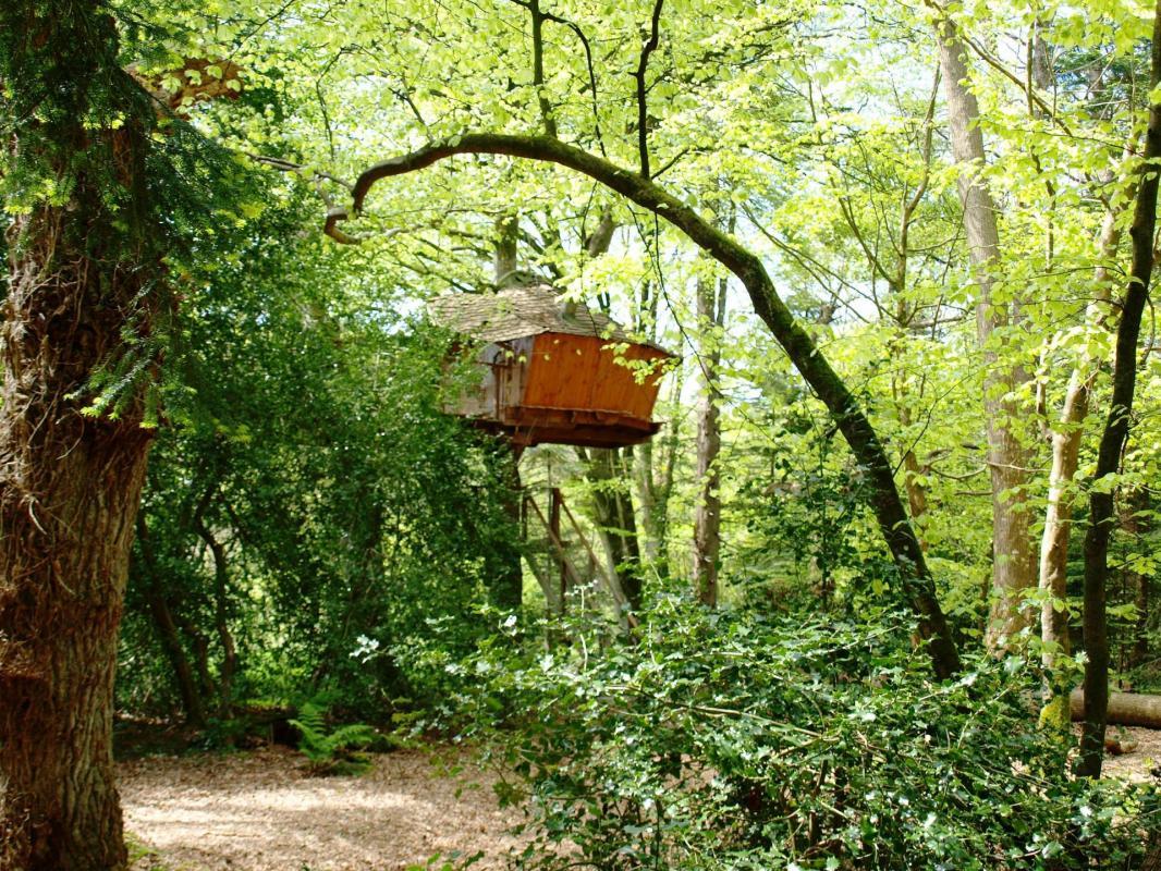 Cabane Jonquille à 6 mètres